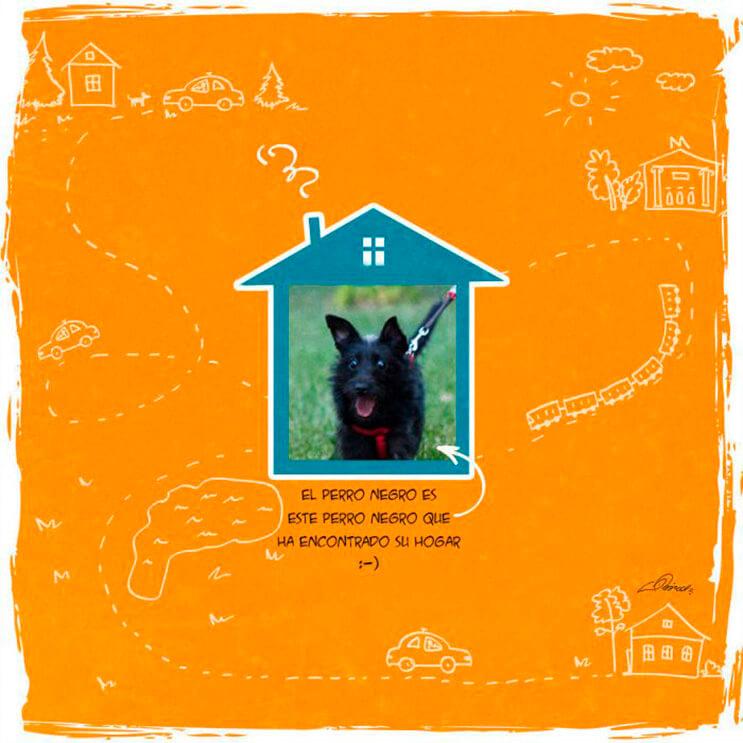 emotiva-ilustracion-nos-muestra-la-importancia-de-la-adopcion-de-animales-14