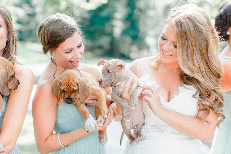 en-vez-de-ramos-de-flores-esta-novia-decidio-llevar-para-su-boda-tiernos-cachorros-rescatados-2