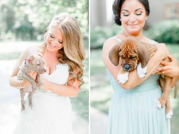 en-vez-de-ramos-de-flores-esta-novia-decidio-llevar-para-su-boda-tiernos-cachorros-rescatados-3