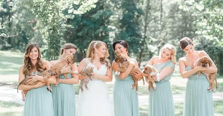 En vez de ramos de flores, esta novia decidió llevar para su boda tiernos cachorros rescatados