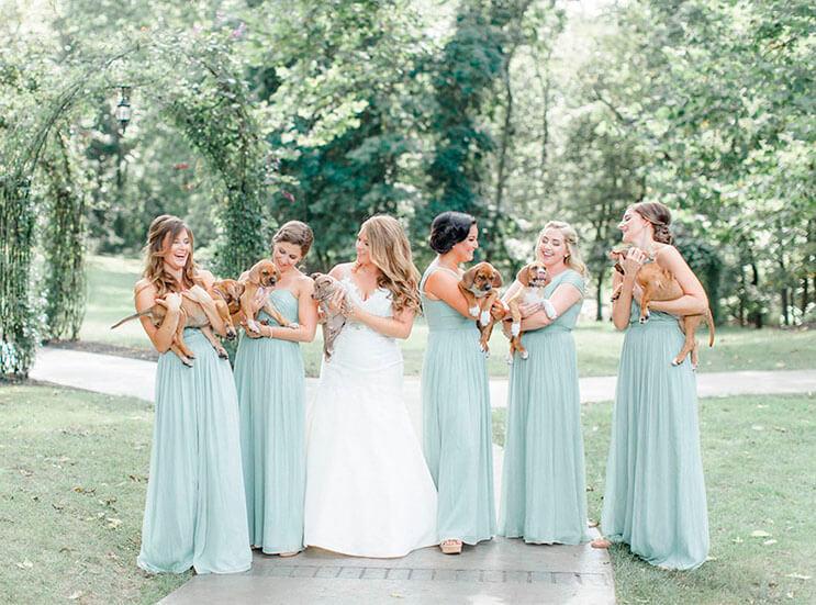 en-vez-de-ramos-de-flores-esta-novia-decidio-llevar-para-su-boda-tiernos-cachorros-rescatados