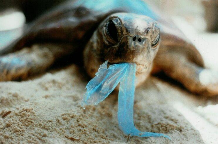 encontraron-una-ballena-muerta-en-holanda-y-lo-que-tenia-en-su-estomago-no-tiene-perdon-tortuga