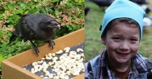 Esta niña alimentaba cuervos y años después le traen regalos