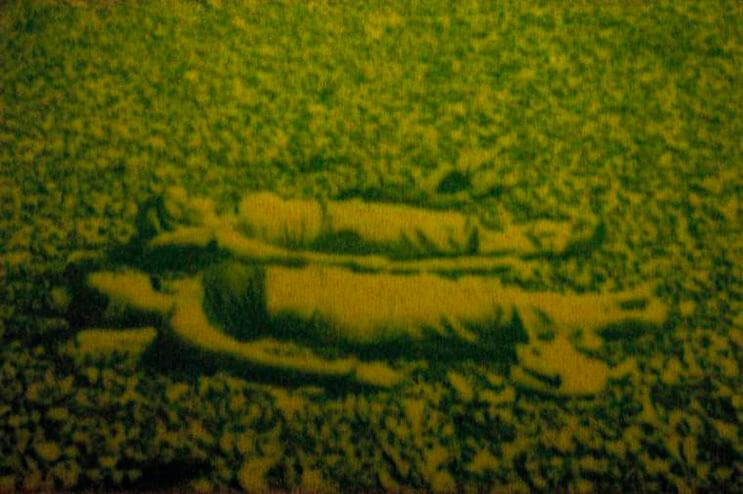 estas-fotografias-estan-hechas-con-grass-y-son-lo-mas-ecologicas-que-hay-9