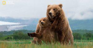 Estas fotos de National Geographic nos muestran lo bella que es la vida animal