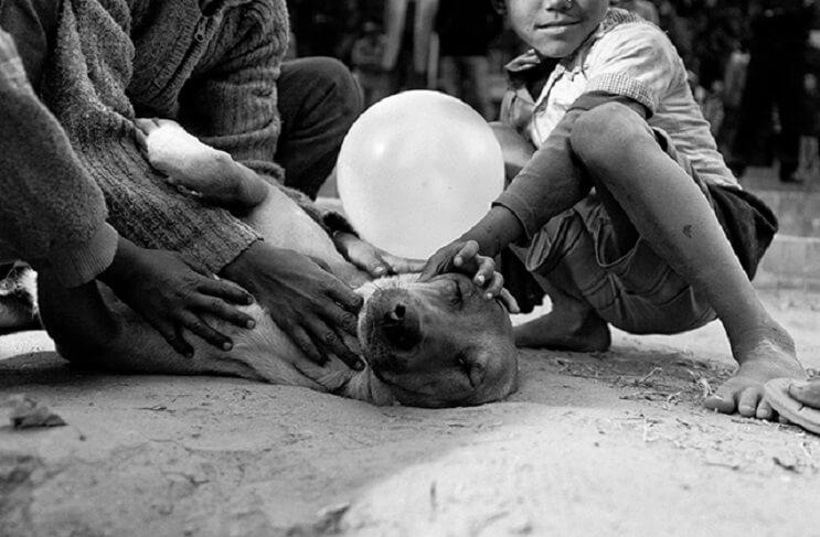 estas-fotos-de-ninos-callejeros-con-sus-perros-nos-muestran-una-gran-leccion-recostado