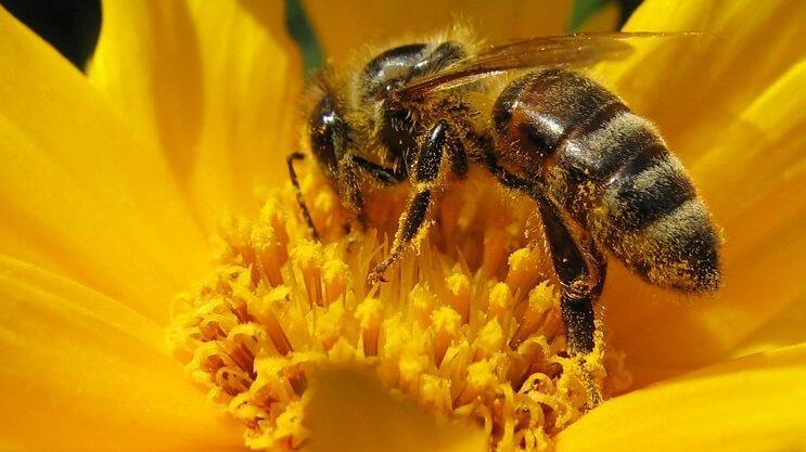 Este accidente provocó la muerte de millones de abejas en Florida