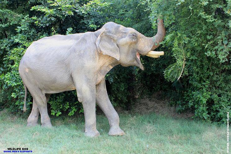 este-elefante-fue-puesto-en-libertad-y-su-felicidad-no-podria-ser-mayor-2