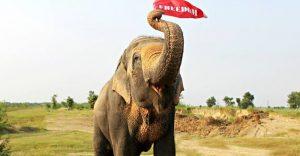 Este elefante fue puesto en libertad y su felicidad no podría ser mayor