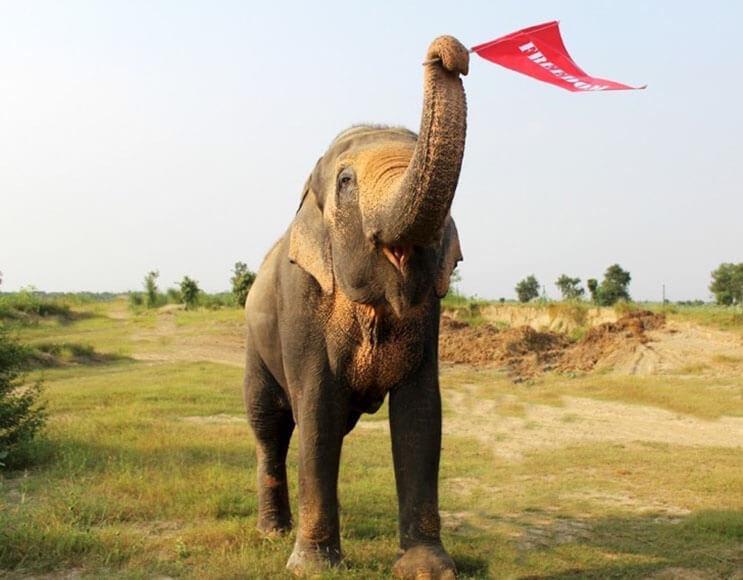 este-elefante-fue-puesto-en-libertad-y-su-felicidad-no-podria-ser-mayor-4