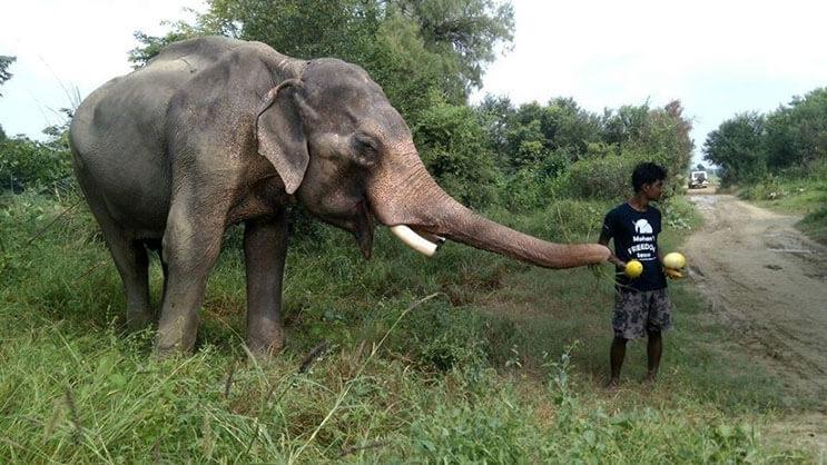 este-elefante-fue-puesto-en-libertad-y-su-felicidad-no-podria-ser-mayor-5