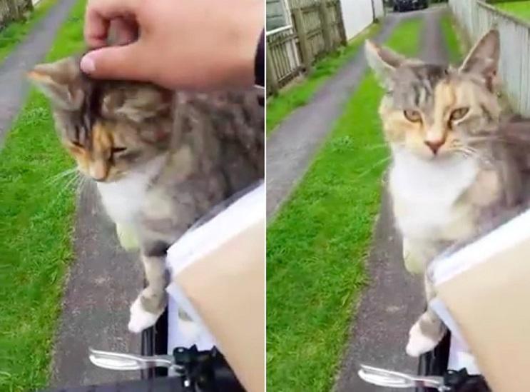 este-gato-persigue-al-cartero-todos-los-dias-por-una-tierna-razon-carino