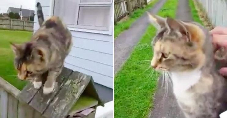 Este gato persigue al cartero todos los días por una tierna razón