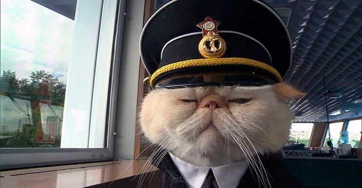 Este gato se convirtió en el capitán de un crucero ruso y los pasajeros están encantados