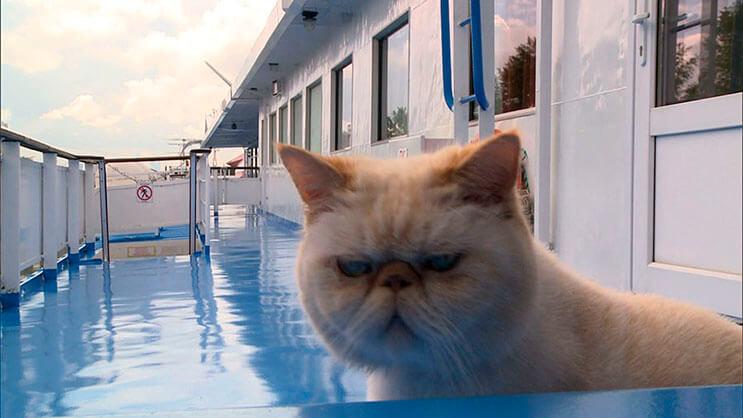 este-gato-se-convirtio-en-el-capitan-de-un-crucero-ruso-2