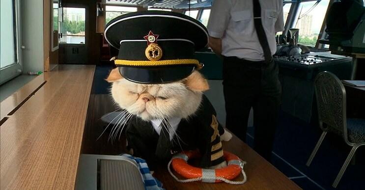 este-gato-se-convirtio-en-el-capitan-de-un-crucero-ruso-4