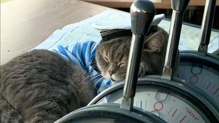este-gato-se-convirtio-en-el-capitan-de-un-crucero-ruso-6