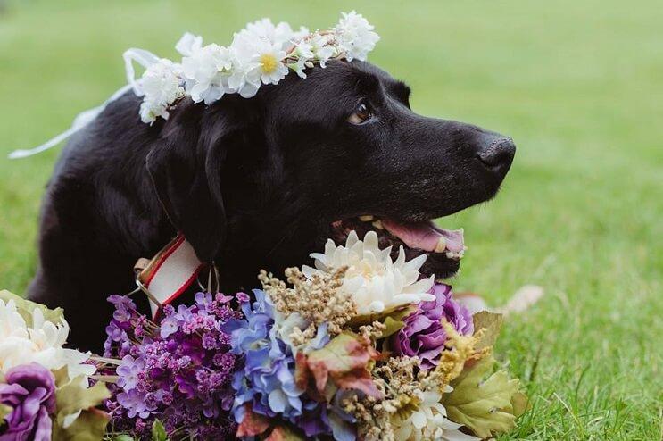 este-perro-guardo-todas-sus-ultimas-energias-para-poder-estar-presente-en-la-boda-de-su-dueno-2