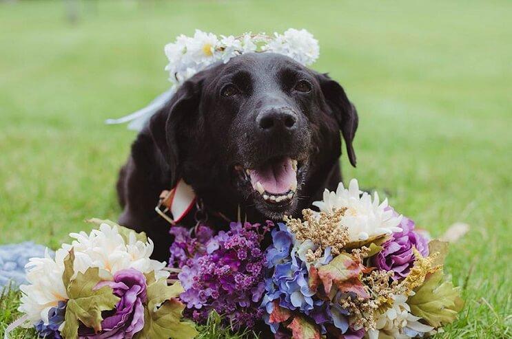 este-perro-guardo-todas-sus-ultimas-energias-para-poder-estar-presente-en-la-boda-de-su-dueno-5