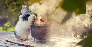 Este conejillo de indias es lo más adorable que verás el día de hoy