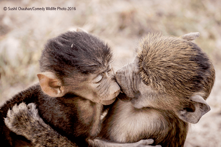 este-singular-concurso-fotografico-premia-a-los-animales-mas-graciosos-1