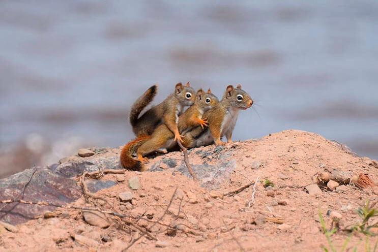 este-singular-concurso-fotografico-premia-a-los-animales-mas-graciosos-10