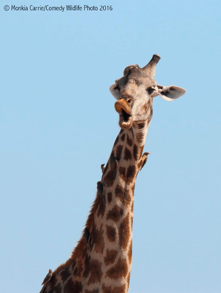 este-singular-concurso-fotografico-premia-a-los-animales-mas-graciosos-13