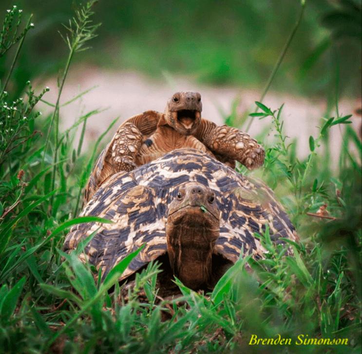 este-singular-concurso-fotografico-premia-a-los-animales-mas-graciosos-14