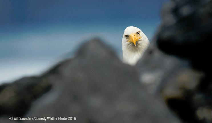 este-singular-concurso-fotografico-premia-a-los-animales-mas-graciosos-15