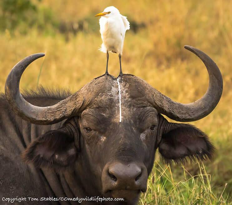 este-singular-concurso-fotografico-premia-a-los-animales-mas-graciosos-7