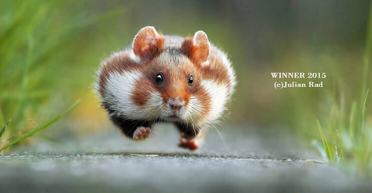 Este singular concurso fotográfico premia a los animales más graciosos