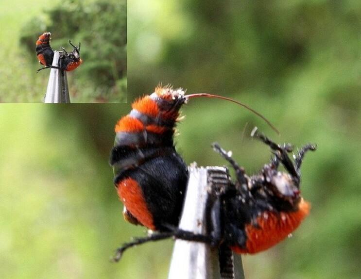 este-sujeto-dejo-que-la-abeja-mas-aguerrida-lo-picara-y-automaticamente-se-arrepintio-por-el-resultado-2