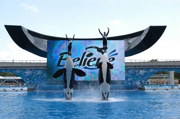 Finalmente, prohíben el uso de orcas para espectáculos 1