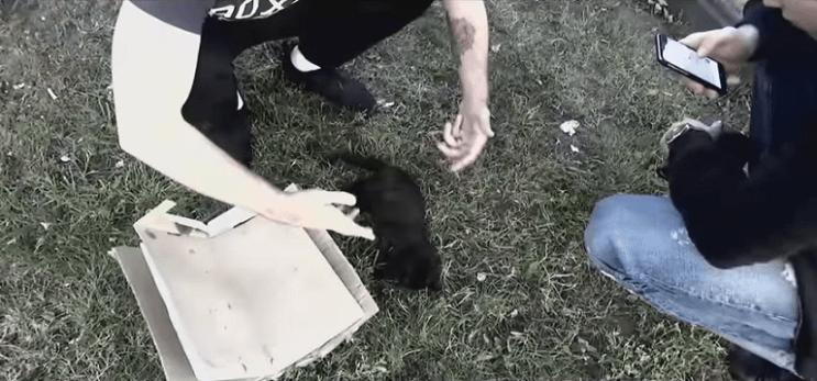 grupo-de-amigos-le-salva-la-vida-a-un-pequeno-gato-moribundo-jardin