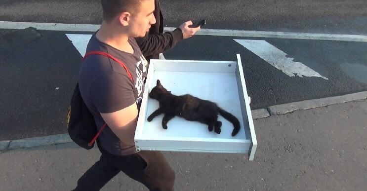 Grupo de amigos le salva la vida a un pequeño gato moribundo