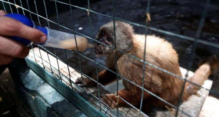 la-crisis-en-venezuela-tambien-esta-afectando-a-los-animales-2-1