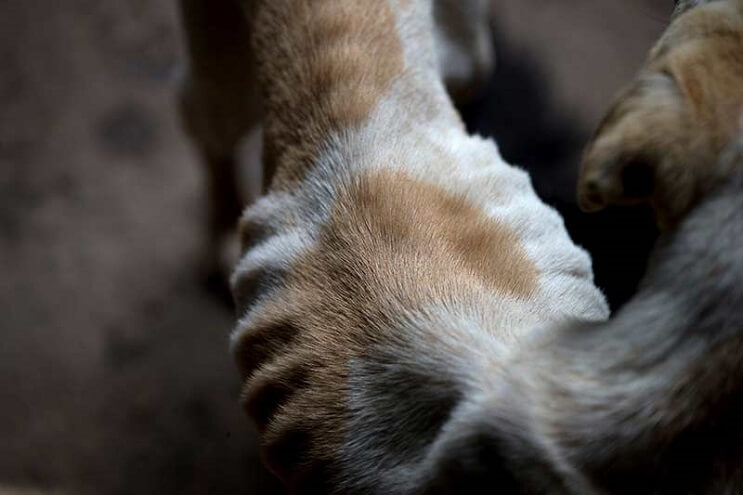 la-crisis-en-venezuela-tambien-esta-afectando-a-los-animales-3