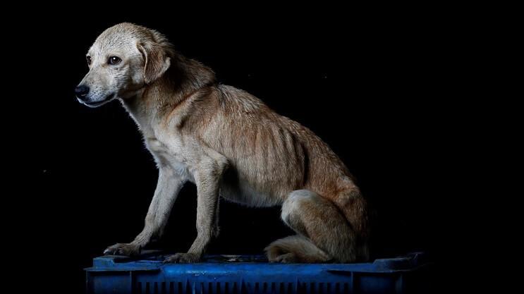 la-crisis-en-venezuela-tambien-esta-afectando-a-los-animales-4
