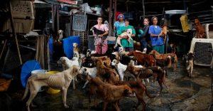 La crisis en Venezuela también está afectando a los animales