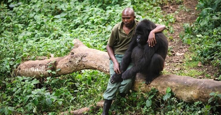 La triste realidad detrás de la foto de un hombre que abraza a un gorila