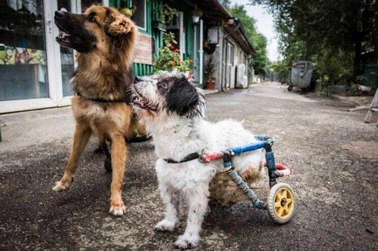 perros-con-dificultades-para-caminar-han-encontrado-en-este-hospital-el-paraiso-2