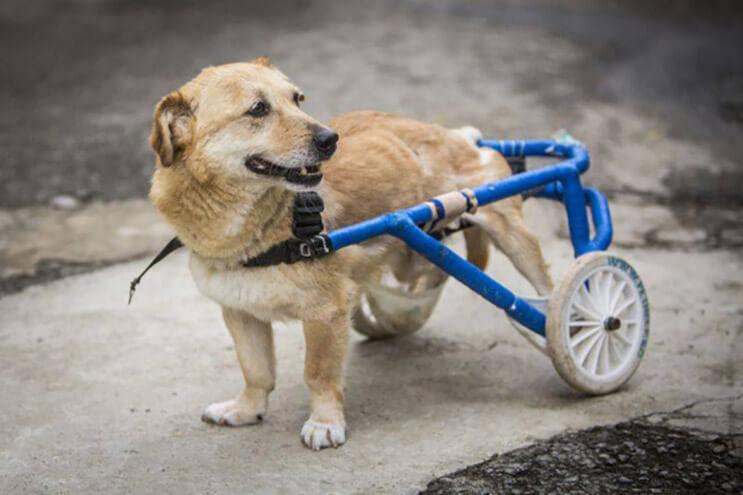 perros-con-dificultades-para-caminar-han-encontrado-en-este-hospital-el-paraiso-3
