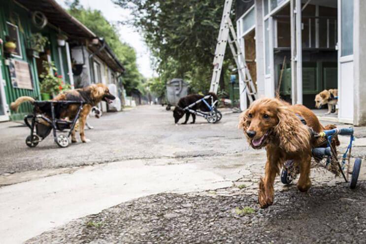 perros-con-dificultades-para-caminar-han-encontrado-en-este-hospital-el-paraiso-4