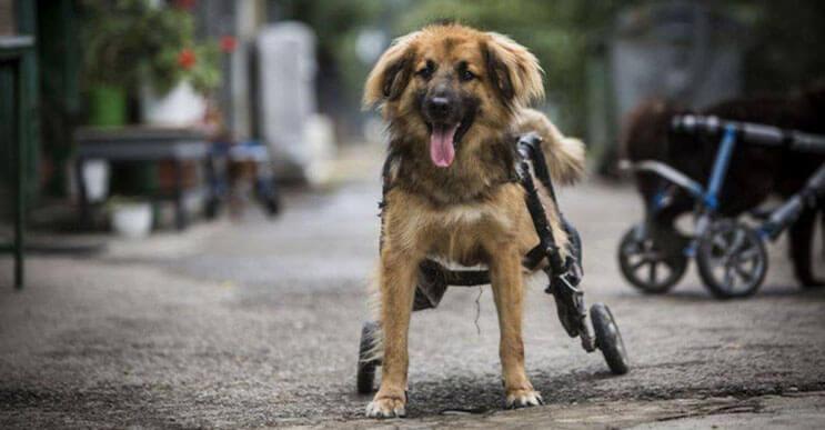 perros-con-dificultades-para-caminar-han-encontrado-en-este-hospital-el-paraiso