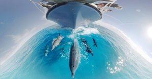 Un vídeo de GoPro que nos invita a nadar con delfines de una manera impresionante