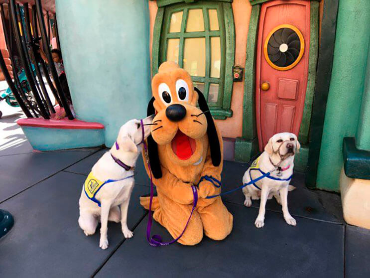 a-este-perro-guia-le-hicieron-un-retrato-en-disney-y-a-la-gente-le-ha-encantado3
