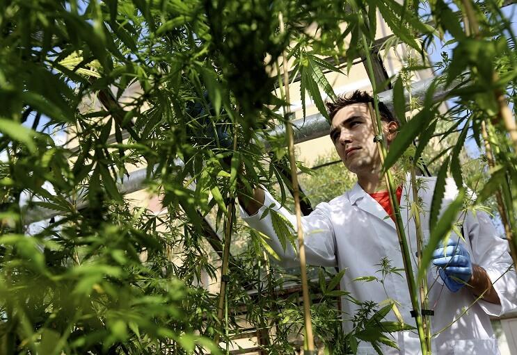 damian-marley-convertira-una-carcel-de-california-en-una-granja-de-marihuana-cientifico