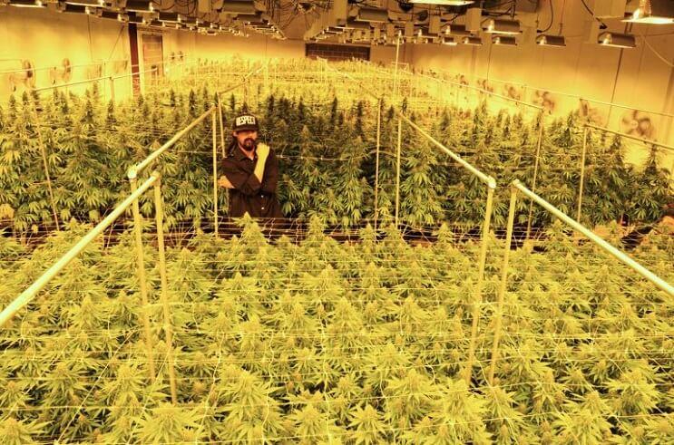 damian-marley-convertira-una-carcel-de-california-en-una-granja-de-marihuana-cosecha
