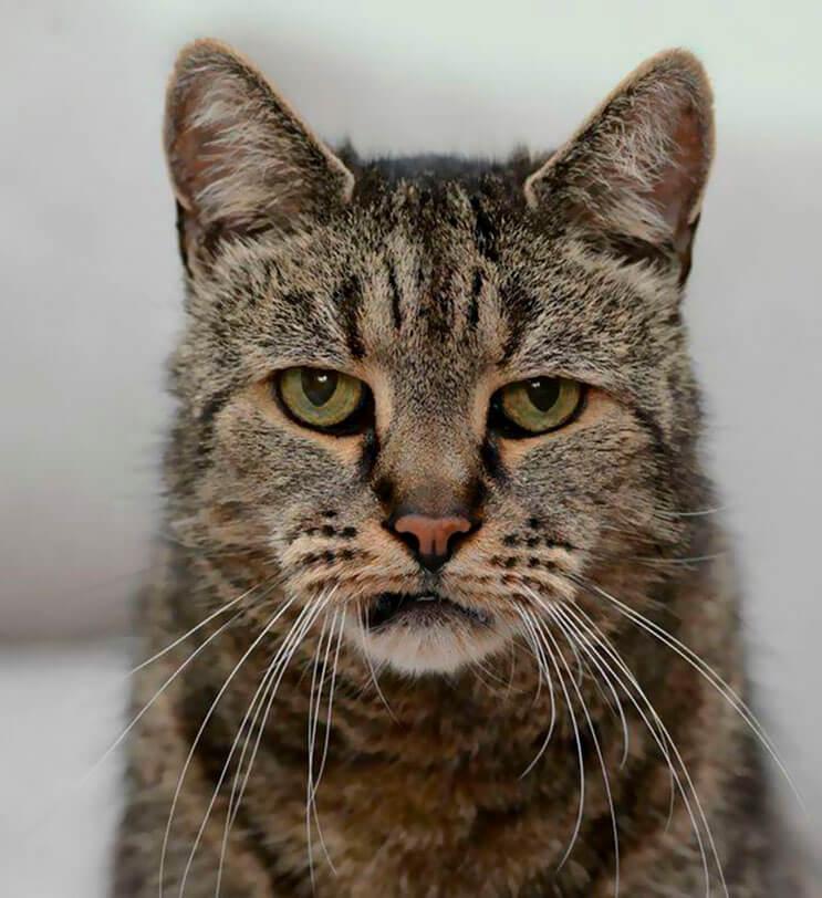 el-gato-mas-viejo-del-mundo-cumplio-31-anos-y-los-celebra-lleno-de-emocion-por-dentro-1