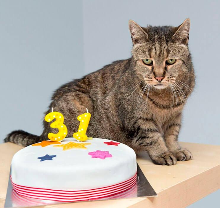el-gato-mas-viejo-del-mundo-cumplio-31-anos-y-los-celebra-lleno-de-emocion-por-dentro-3